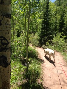 After the long, uphill hike, Casey wanted to run down!